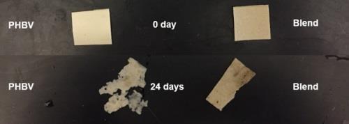 Nhựa sinh học kết hợp với cao su tự nhiên